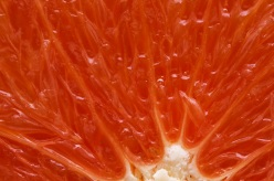 citrus_sinensis_cara_cara1