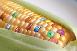 pharmcorn